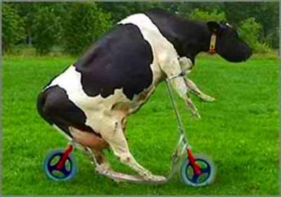 vaca-louca1.jpg